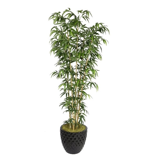 Laura Ashley 78'' Tall Natural Bamboo Tree in 16'' Fiberstone Planter
