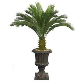 "Laura Ashley 62"" Tall Cycas Palm Tree in 16"" Fiberstone Planter"