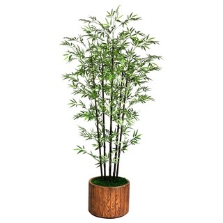 Laura Ashley 77' Tall Black Bamboo Tree in 16' Fiberstone Planter