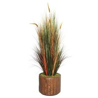 "Laura Ashley 65"" Tall Onion Grass with Cattails in 16"" Fiberstone Planter"