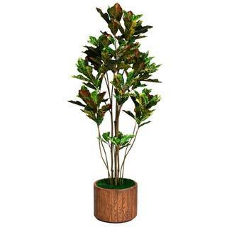 """Laura Ashley 77"""" Tall Croton Tree with Multiple Trunks in 16"""" Fiberstone Planter"""