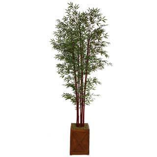 Laura Ashley 101' Tall Harvest Bamboo Tree in 13' Fiberstone Planter