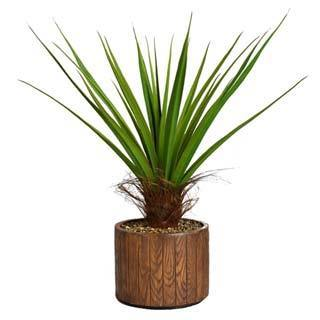 "Laura Ashley 49"" Tall Agave Plant with Cocoa Skin in 16"" Fiberstone Planter"
