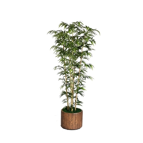 Laura Ashley 77-inch Tall Natural Bamboo Tree in 16-inch Fiberstone Planter