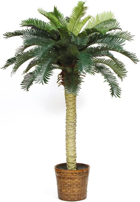 Sago Palm Silk Tree 4-foot - Green