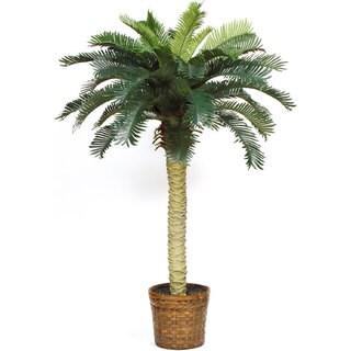 Sago Palm Silk Tree 4-foot