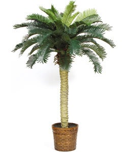 Sago Palm Silk Tree 4-foot