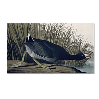 John James Audubon 'American Coot' Canvas Art
