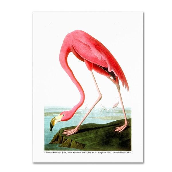 John James Audubon 'American Flamingo 1834' Canvas Art - Multi