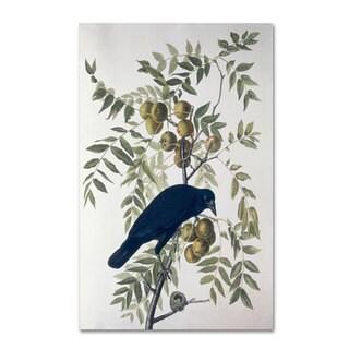 John James Audubon 'American Crow' Canvas Art