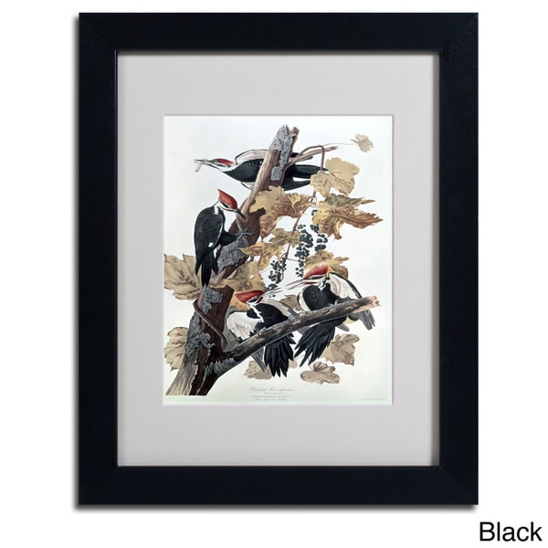 John James Audubon Pileated Woodpeckers Framed Matted