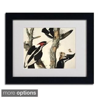 John James Audubon 'Ivory-Billed Woodpecker' Framed Matted Art