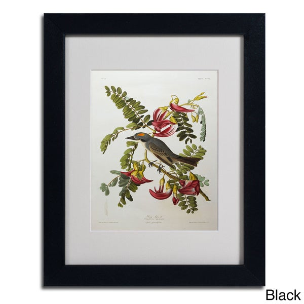 John James Audubon Gray Tyrant Amp Gray Kingbird Framed