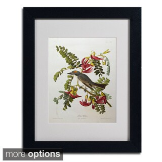 John James Audubon 'Gray Tyrant & Gray Kingbird' Framed Matted Art