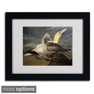 John James Audubon 'Gannets' Framed Matted Art