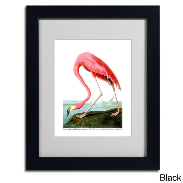 John James Audubon American Flamingo Framed Matted Art