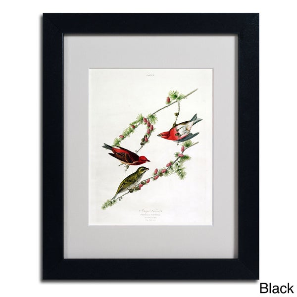 John James Audubon Purple Finch Framed Matted Art Free