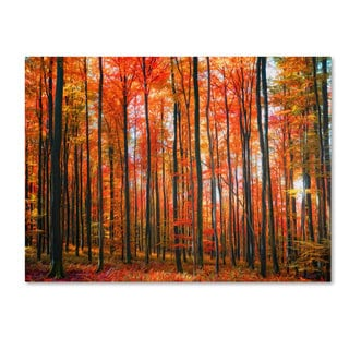 Philippe Sainte-Laudy 'Dominated' Canvas art