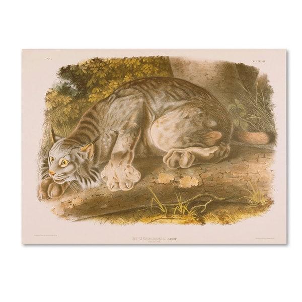 John James Audubon 'Canada Lynx' Canvas Art - Multi