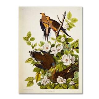 John James Audubon 'Carolina Turtledove' Canvas Art