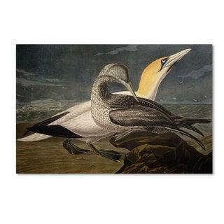John James Audubon 'Gannets' Canvas Art