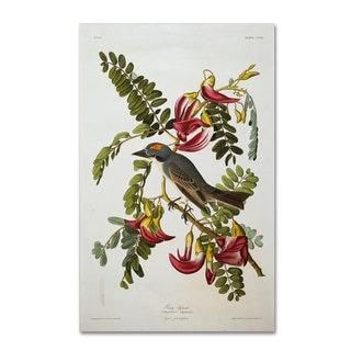 John James Audubon 'Gray Tyrant and Gray Kingbird' Canvas Art