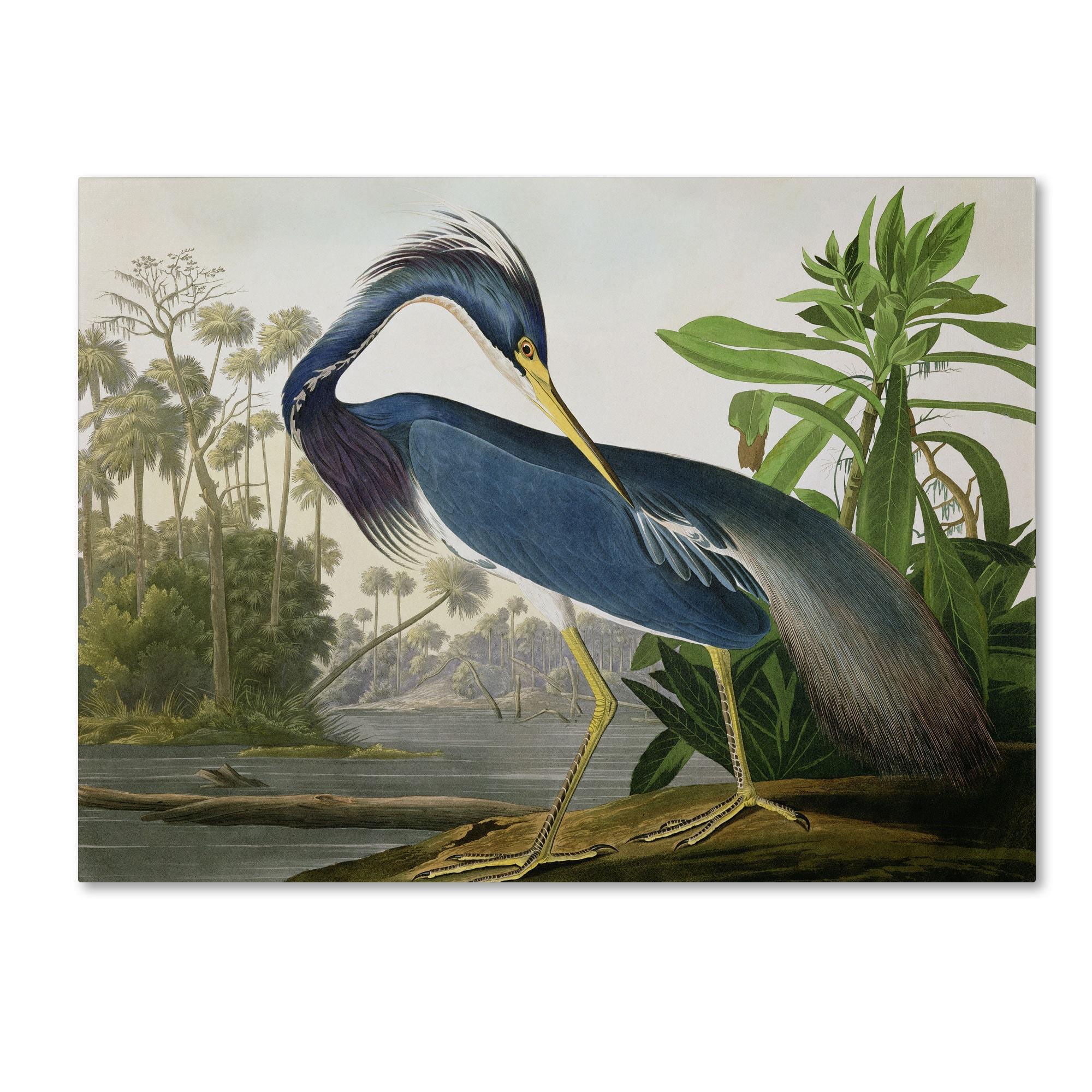 Clay Alder Home John James Audubon 'Louisiana Heron' Canvas Art
