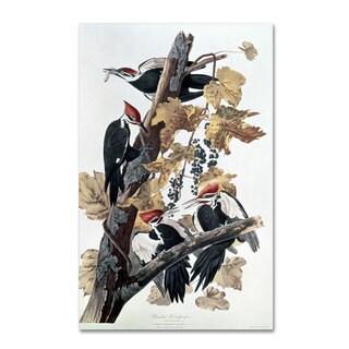 John James Audubon 'Pileated Woodpeckers' Canvas Art