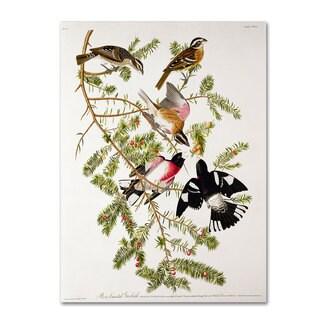 John James Audubon 'Rose-Breasted Grosbeak' Canvas Art