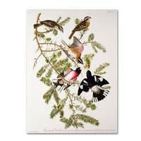 John James Audubon 'Rose-Breasted Grosbeak' Canvas Art - Multi