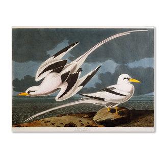John James Audubon 'Tropic Bird' Canvas Art