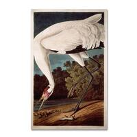 John James Audubon 'Whooping Crane' Canvas Art