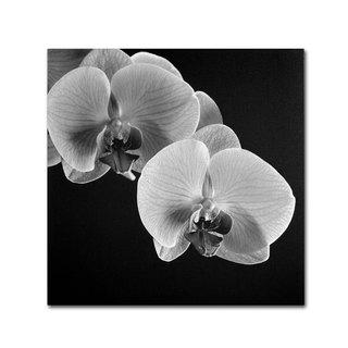 Michael Harrison 'Orchids' Canvas Art