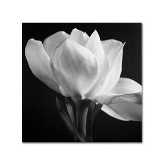 Silver Orchid Crain Michael Harrison 'Gardenia' Canvas Art