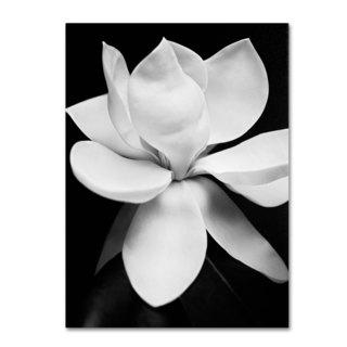 Michael de Guzman 'Magnolia' Canvas Art