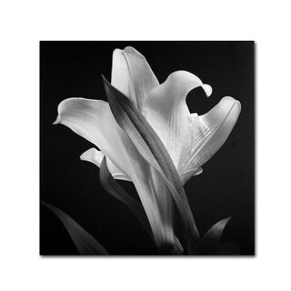 Michael Harrison 'Lily' Canvas Art