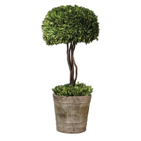 Uttermost Preserved Boxwood Tree Topiary - Green