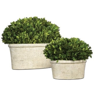 Uttermost Preserved Boxwood with Oval Dome (Set of 2)