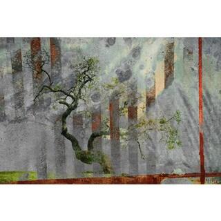 Parvez Taj 'Tranquility' Canvas Art
