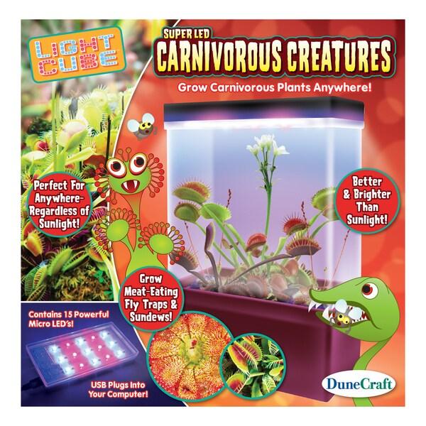 LED Light Cube Terrariums Carnivorous Creatures