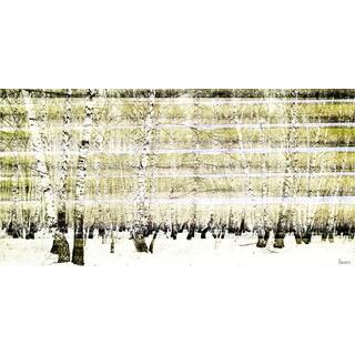Parvez Taj 'Aspen Forest' Canvas Print