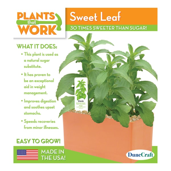 Sweet Leaf Plant Kit