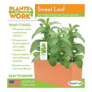 Sweet Leaf Plant Kit|https://ak1.ostkcdn.com/images/products/8646034/P15907388.jpg?impolicy=medium