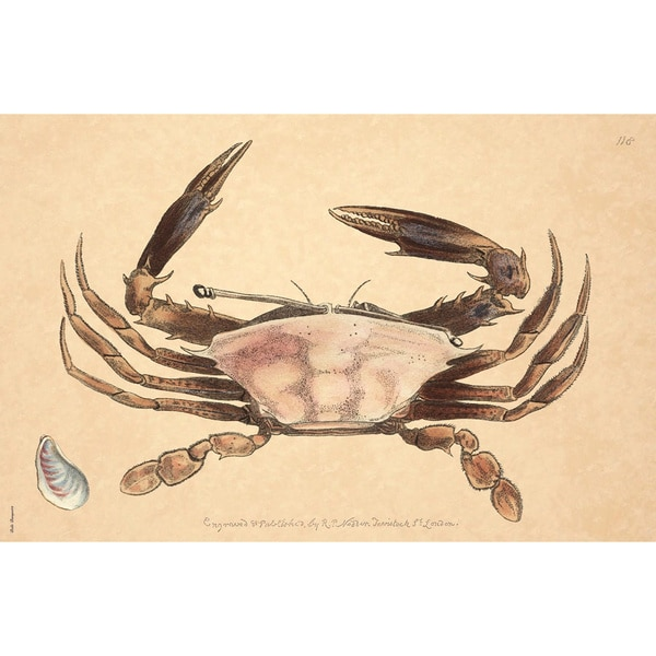Mussel Crab Stain-resistant Reusable Paper Placemats (Set of 6)