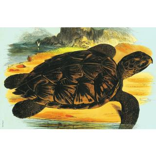 Sea Turtle Stain-resistant Reusable Paper Placemats (Set of 6)