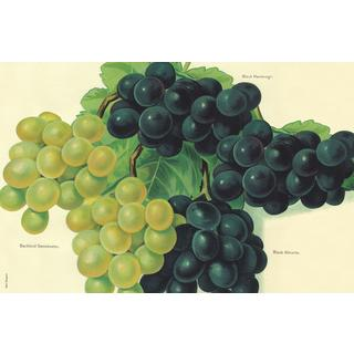 Grapes Stain-resistant Reusable Paper Placemats (Set of 6)