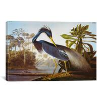 iCanvas Louisiana Heron From 'Birds of America' by John James Audubon Canvas Print Wall Art
