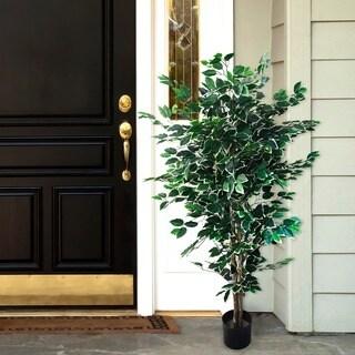 Shop Romano 5 Foot Indoor Outdoor Ficus Tree Free