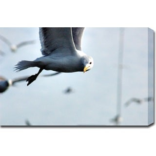 'Seagull' Gallery-wrapped Photography Canvas Art
