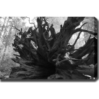 'Root' Gallery-wrapped Photography Canvas Art